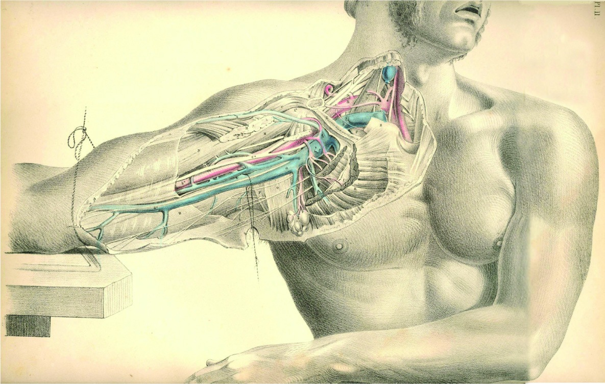 46 Anatomy Wallpaper Hd On Wallpapersafari