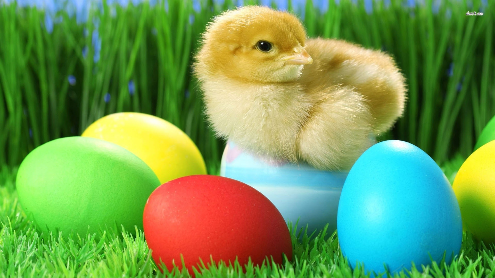 Easter Chick Wallpaper 1920x1080