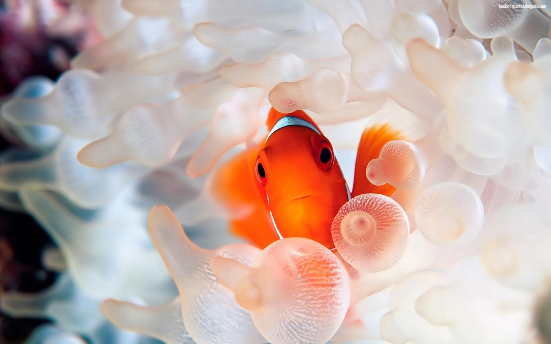 coral reef fish desktop wallpaper hd widescreen Gratis 20880 1920x1200