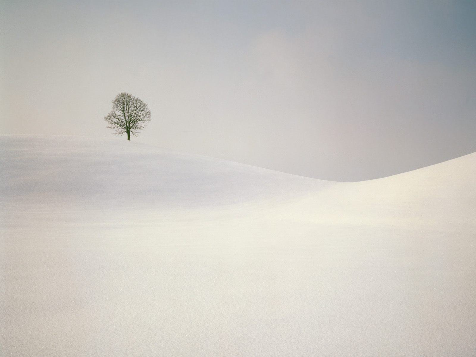 Backgrounds   snowfall winter wallpapers trees full cold weather 1600x1200