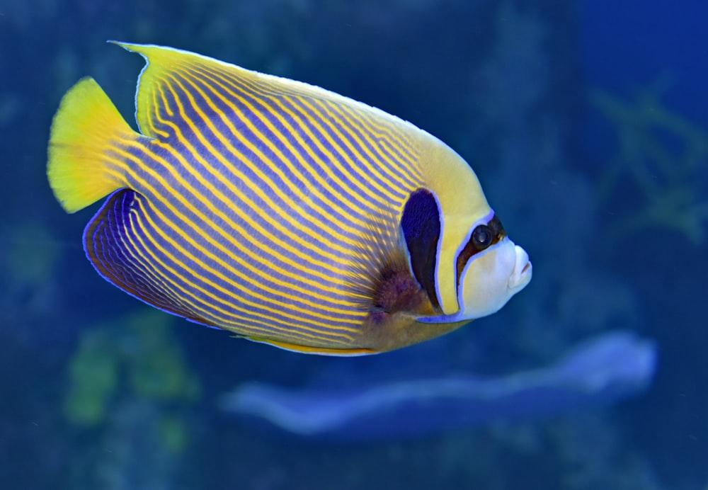 Emperor Angel Fish Pictures Download Images on Unsplash 1000x692