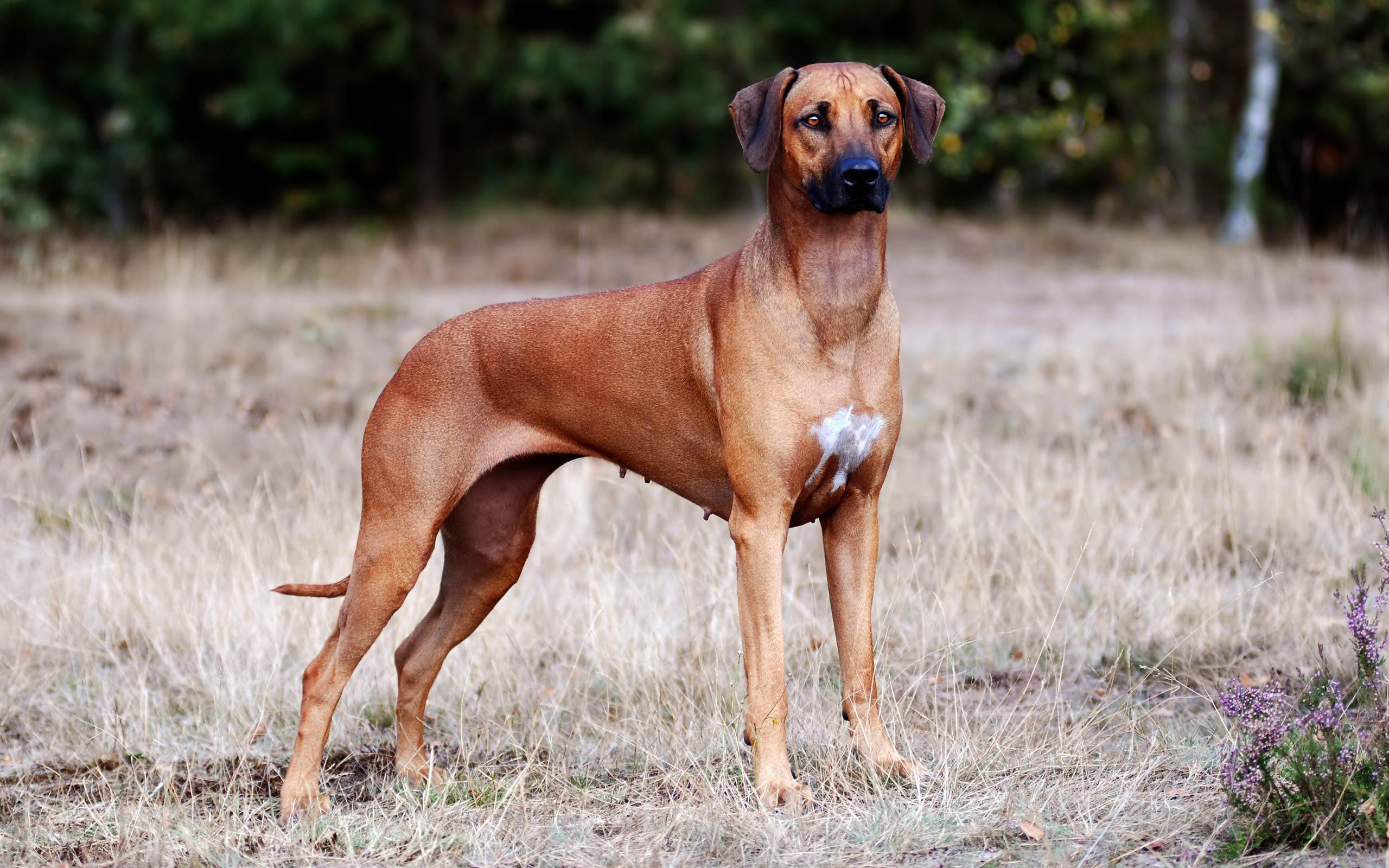Best 41 Hound Dog Backgrounds on HipWallpaper Funny Dog 2560x1600