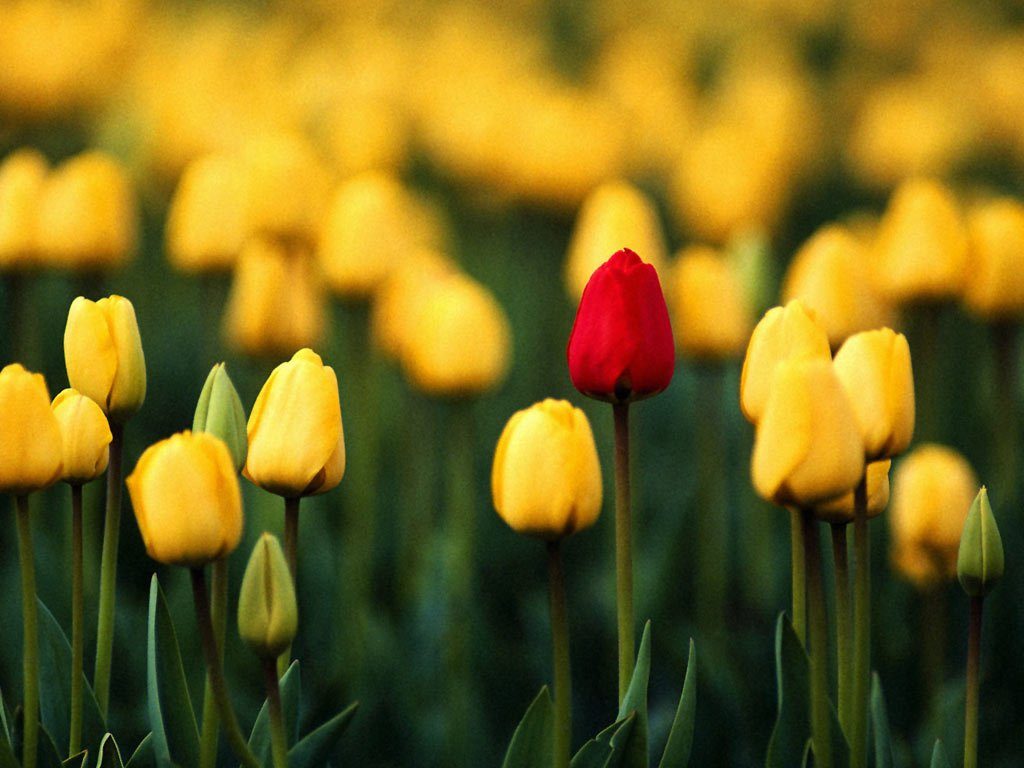 flowers for flower lovers Desktop flowers wallpapers 1024x768