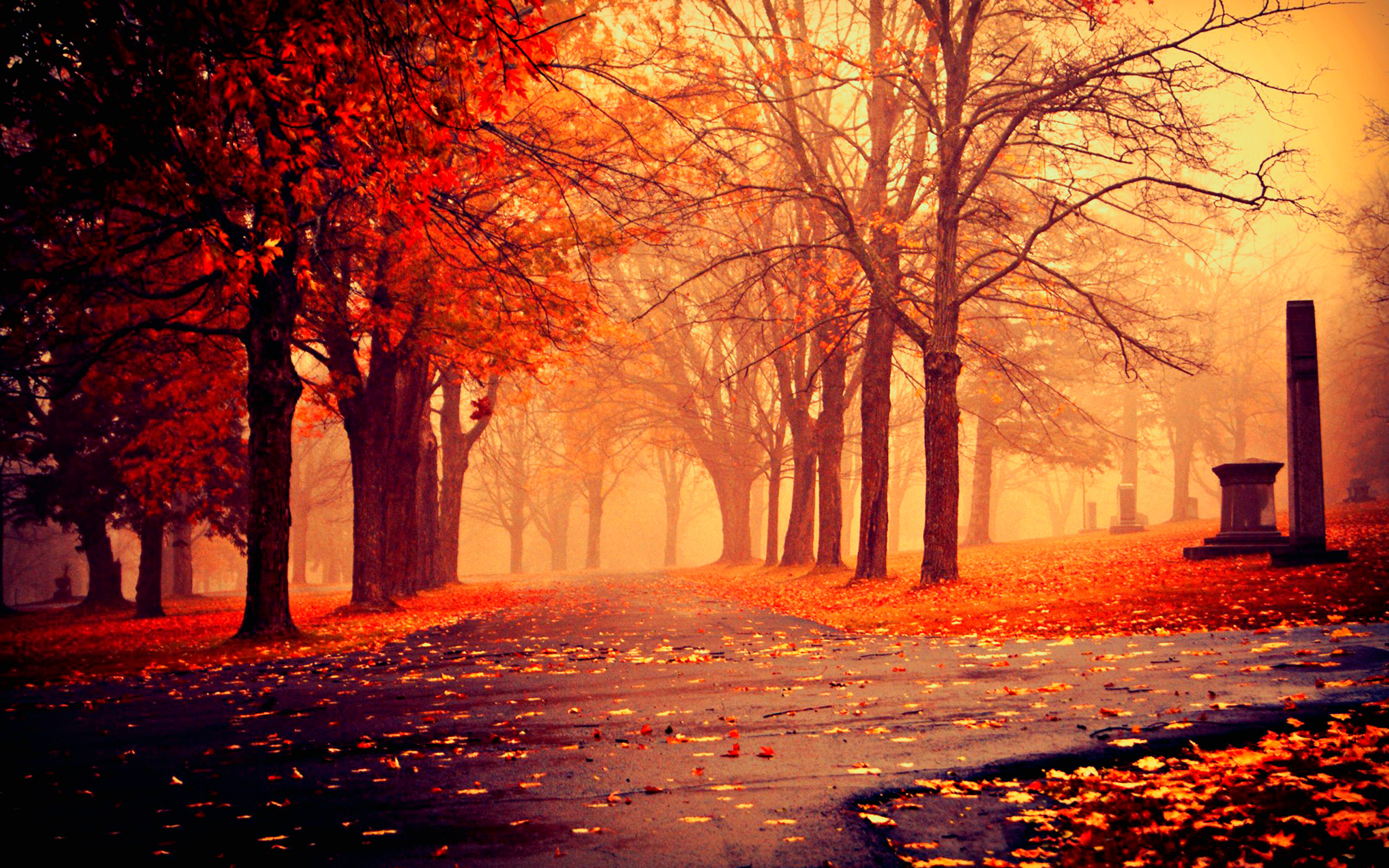 Autumn Nature Wallpapers HD Pictures One HD Wallpaper Pictures 2560x1600