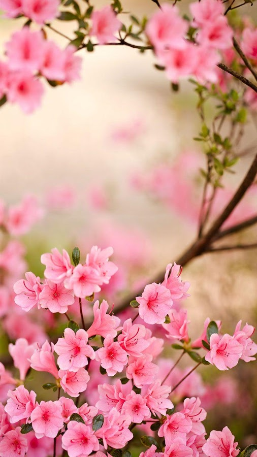 Spring Flowers Live Wallpaper   Android Apps on Google Play 506x900