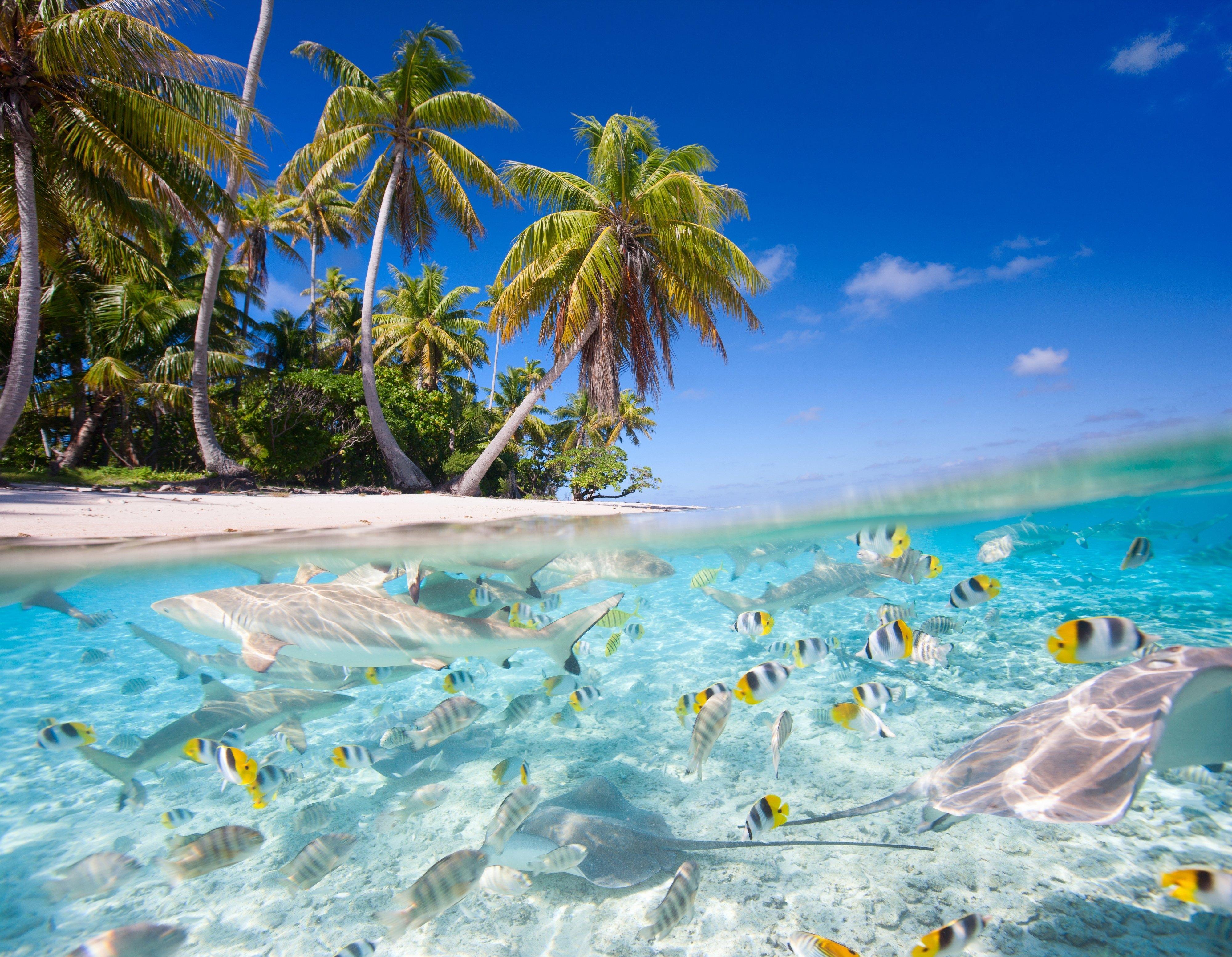tropical ocean scenery wallpaper wallpapersafari