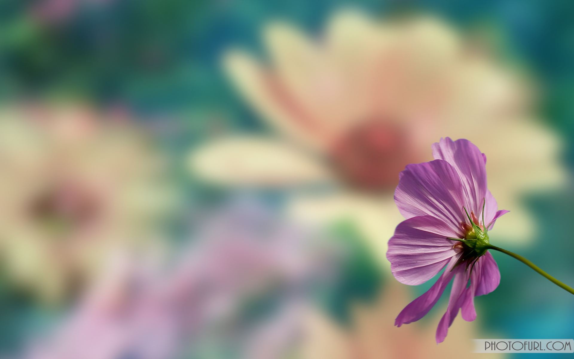 Free Colorful Flower Wallpaper Downloads: [49+] Full Screen Flower Wallpaper On WallpaperSafari