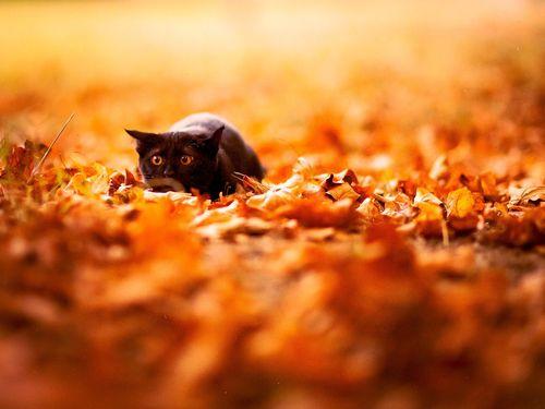 Cute Fall Wallpaper 500x375