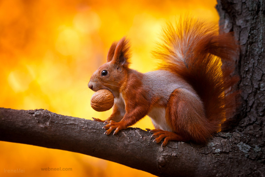 squirrel wildlife photography View all Wildlife Photography Wildlife 900x600