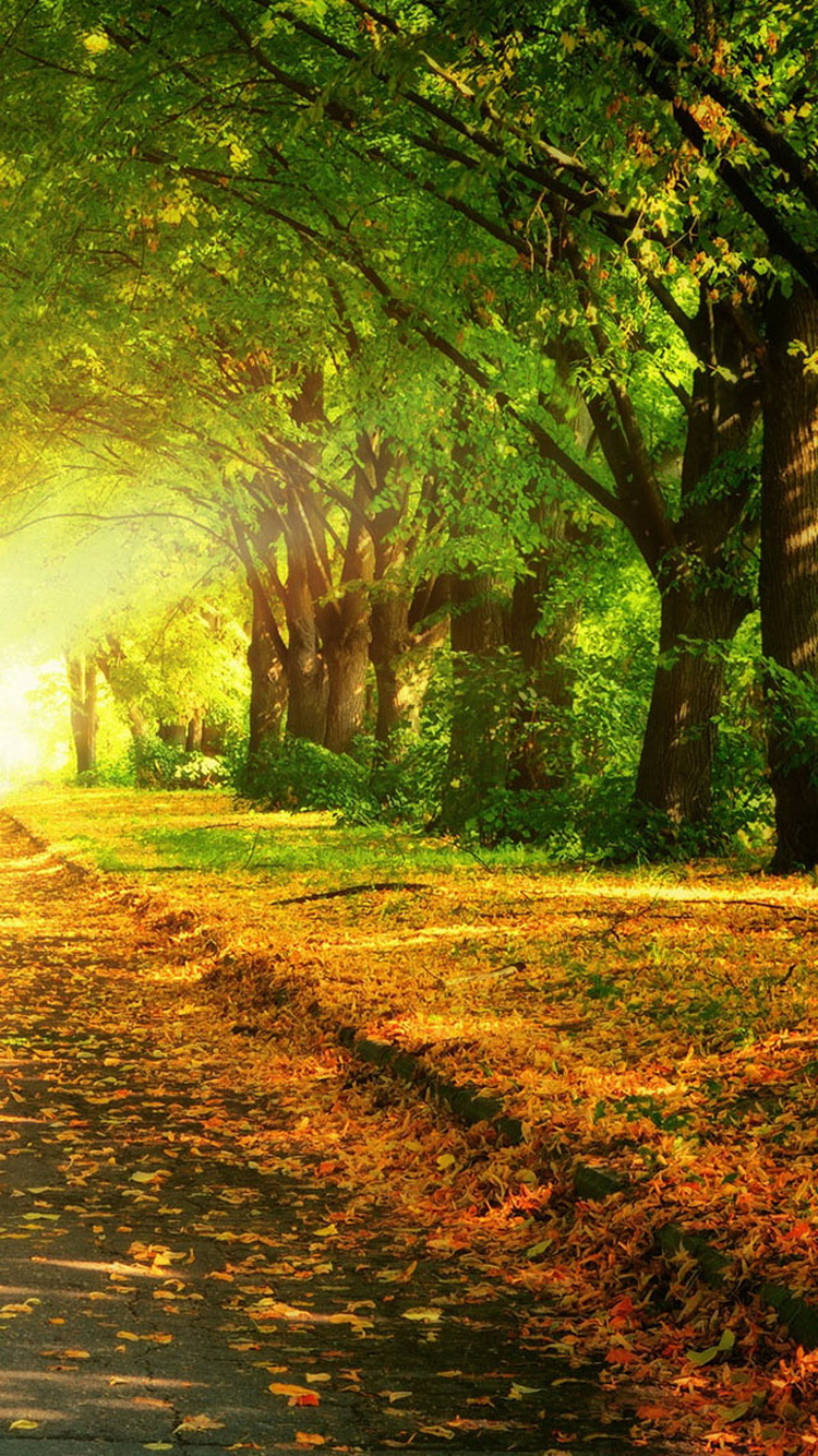 Autumn path iPhone 6 Wallpaper iPhone 6 Wallpaper 750x1334 HD 750x1334