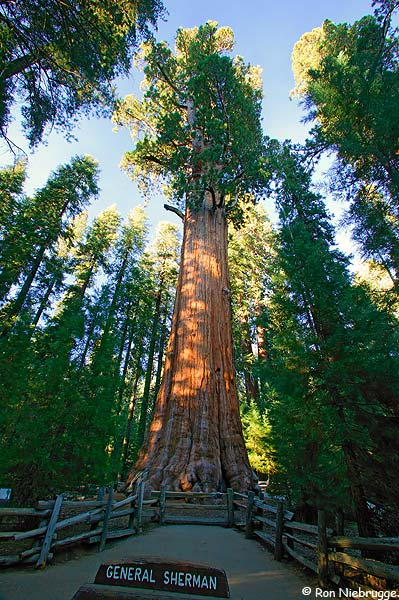 Sequoia Photos Sequoia National Park HD Walls Find Wallpapers 399x600