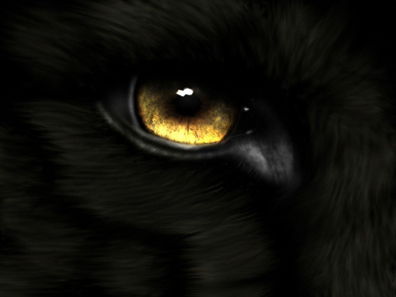 download Animal Eye Gold Wolf Wallpaper Eyes wallpaper Wolf 1366x1024