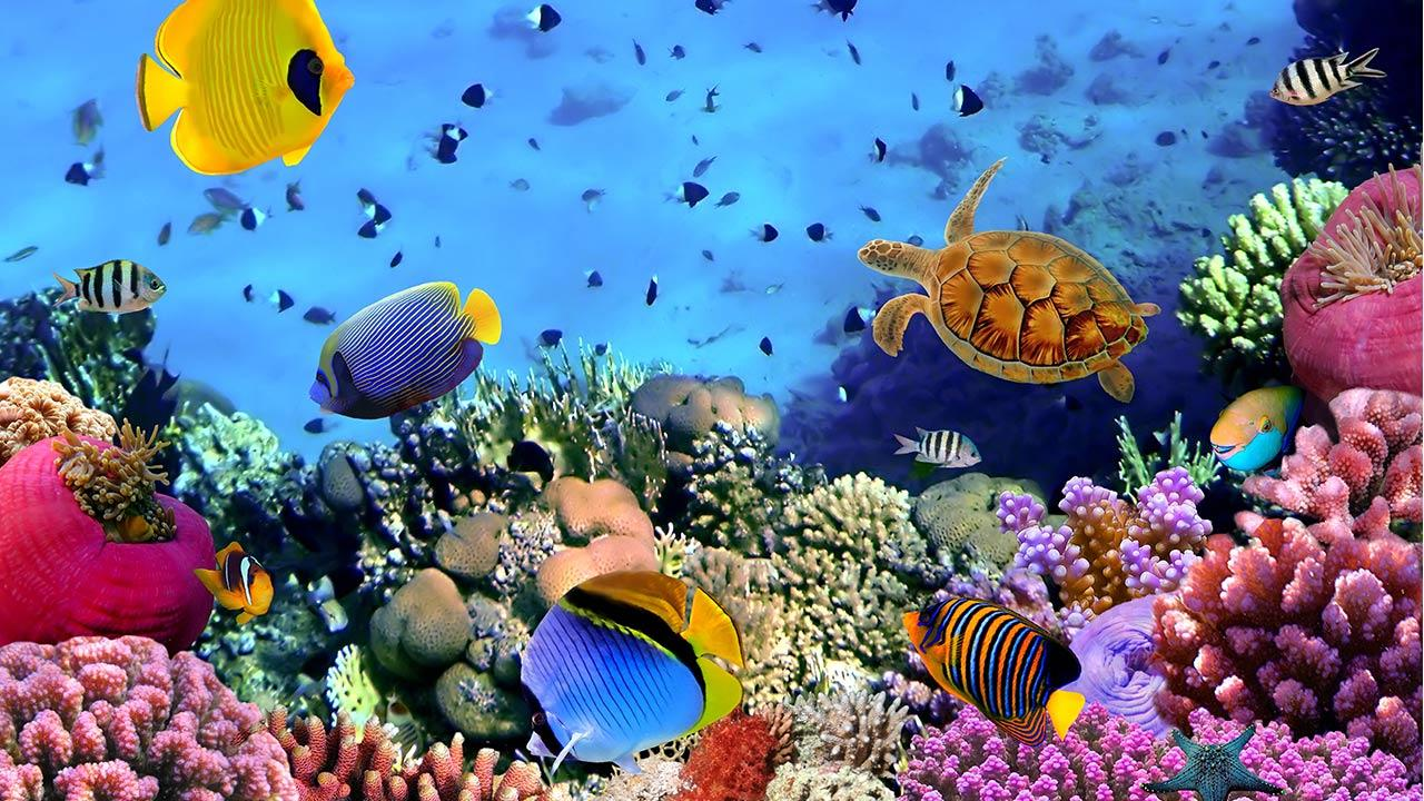 ocean fish live wallpaper offers you gorgeous animated backgrounds of 1280x720