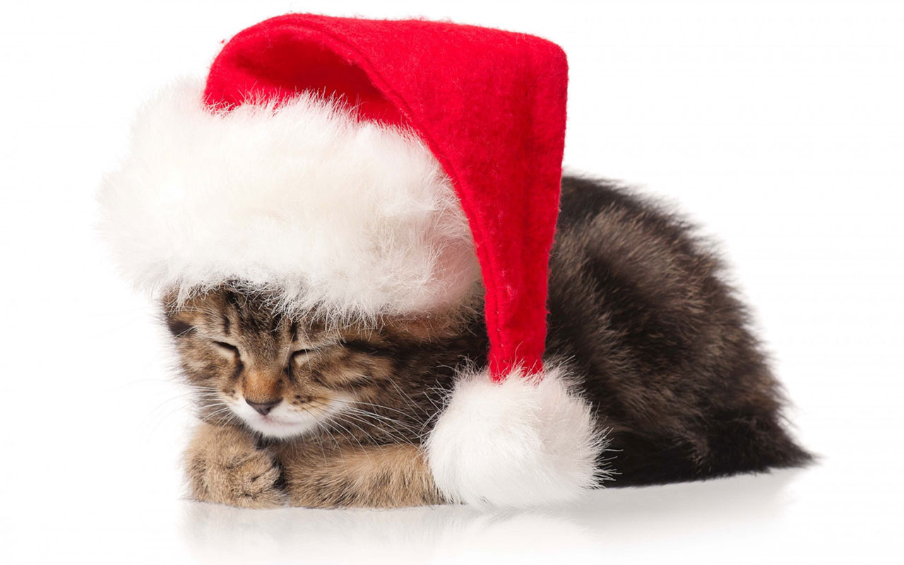 Christmas cute kittens wallpaper5 Holiday Wallpapers 1280x800