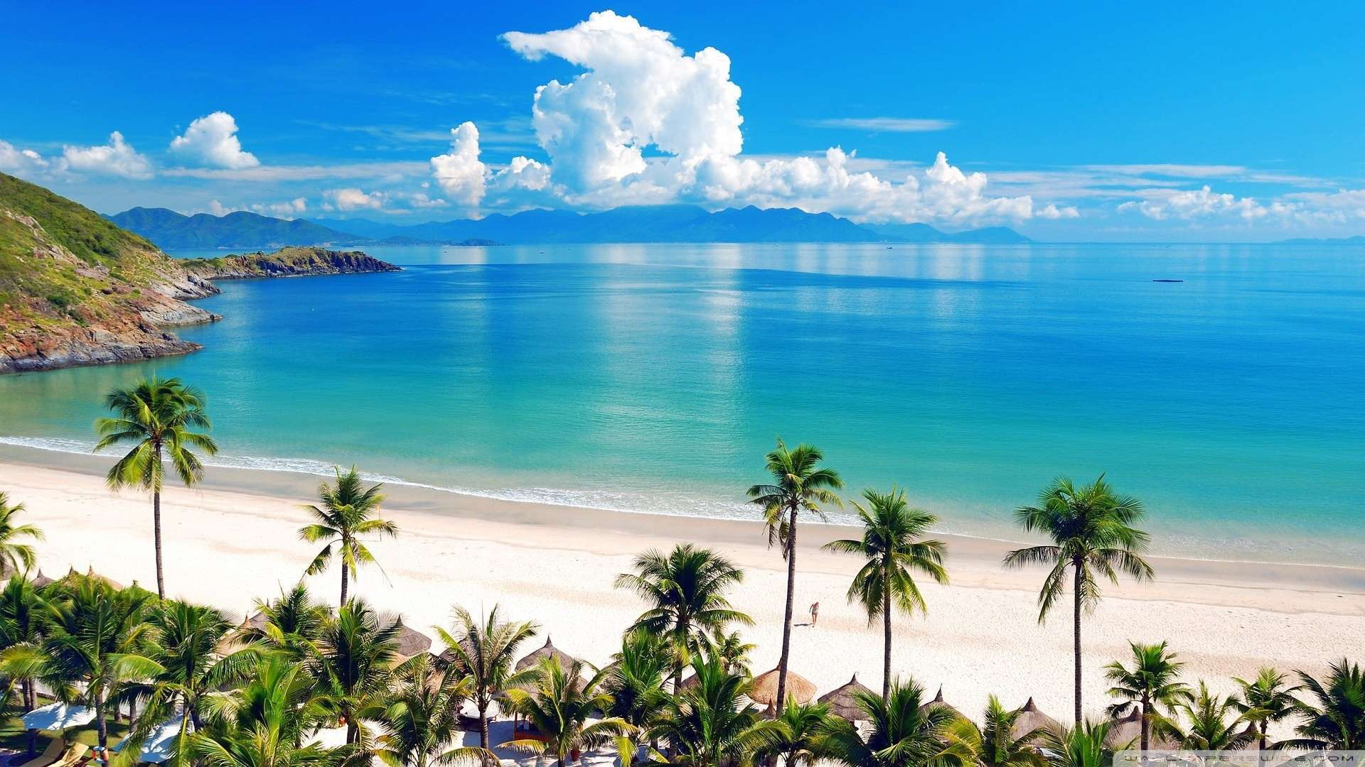 Wallpaper Sea Beach Palm Wallpaper 1080p HD Upload at February 2 1920x1080