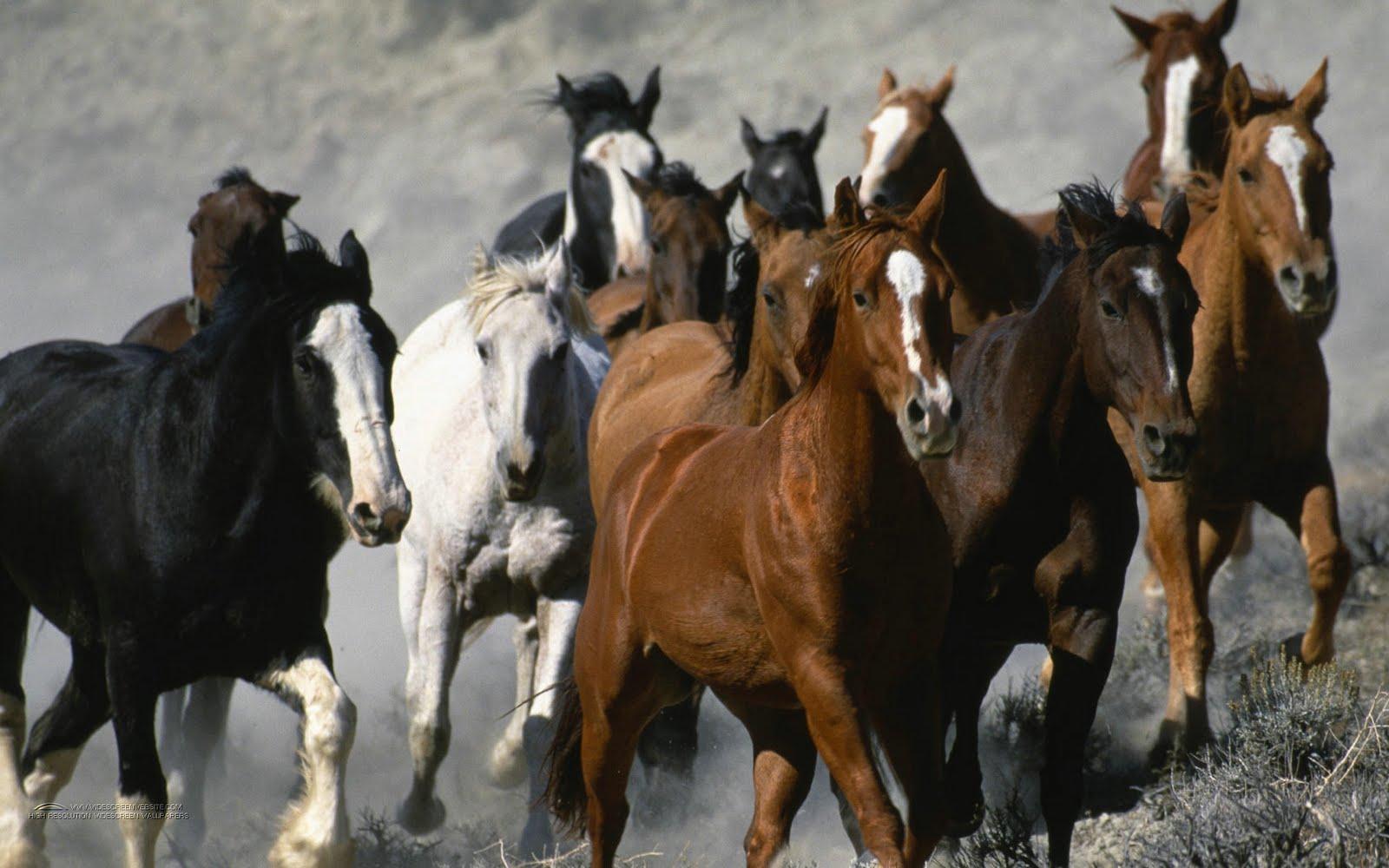 Running Horse Wallpapers White Horses Running Wallpapers for Desktop 1600x1000
