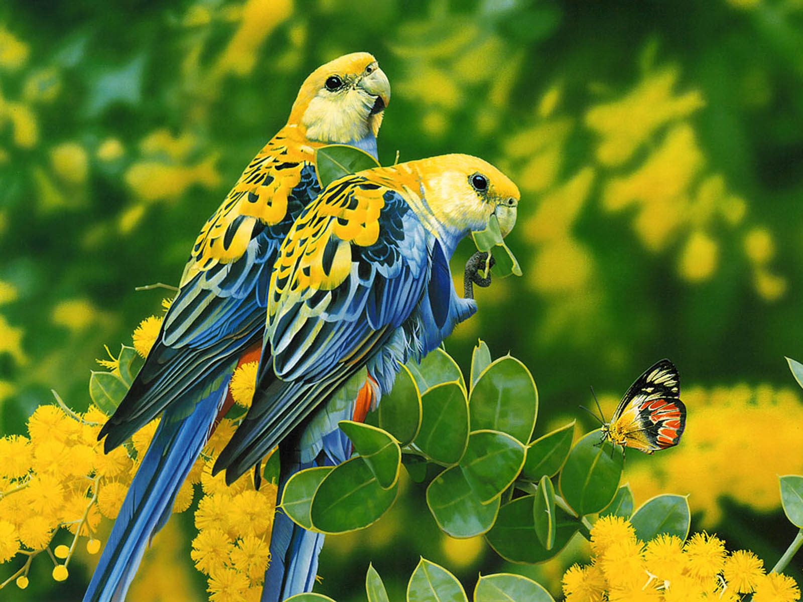 Free Download Gallery For Gt Love Bird Wallpaper 1600x1200 For Your Desktop Mobile Tablet Explore 73 Love Birds Wallpaper Free Wallpapers And Screensavers Birds Free Love Screensavers And Wallpaper
