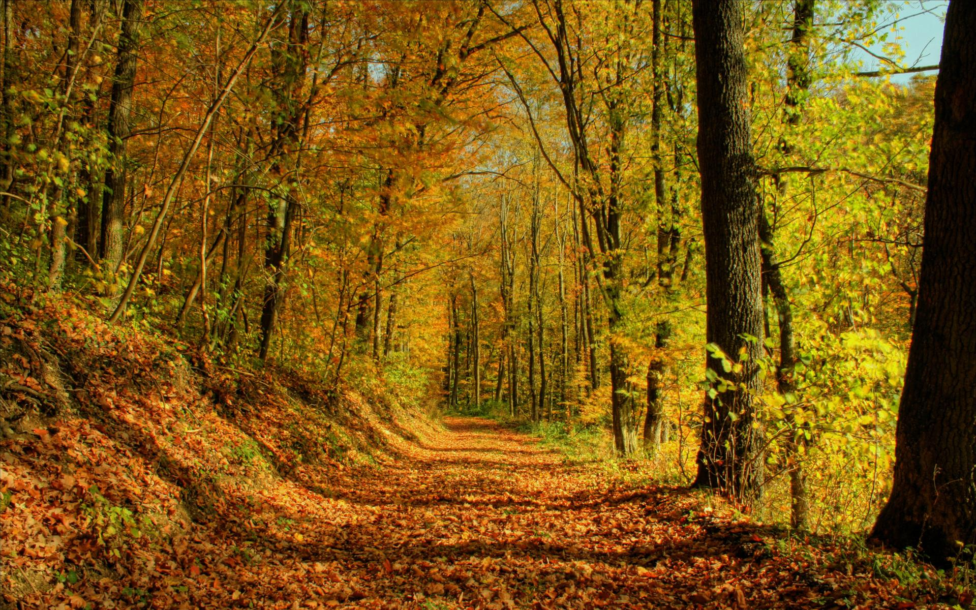 Fall Autumn Forrest Wallpaper LOLd Wallpaper   Funny Pictures 1920x1200