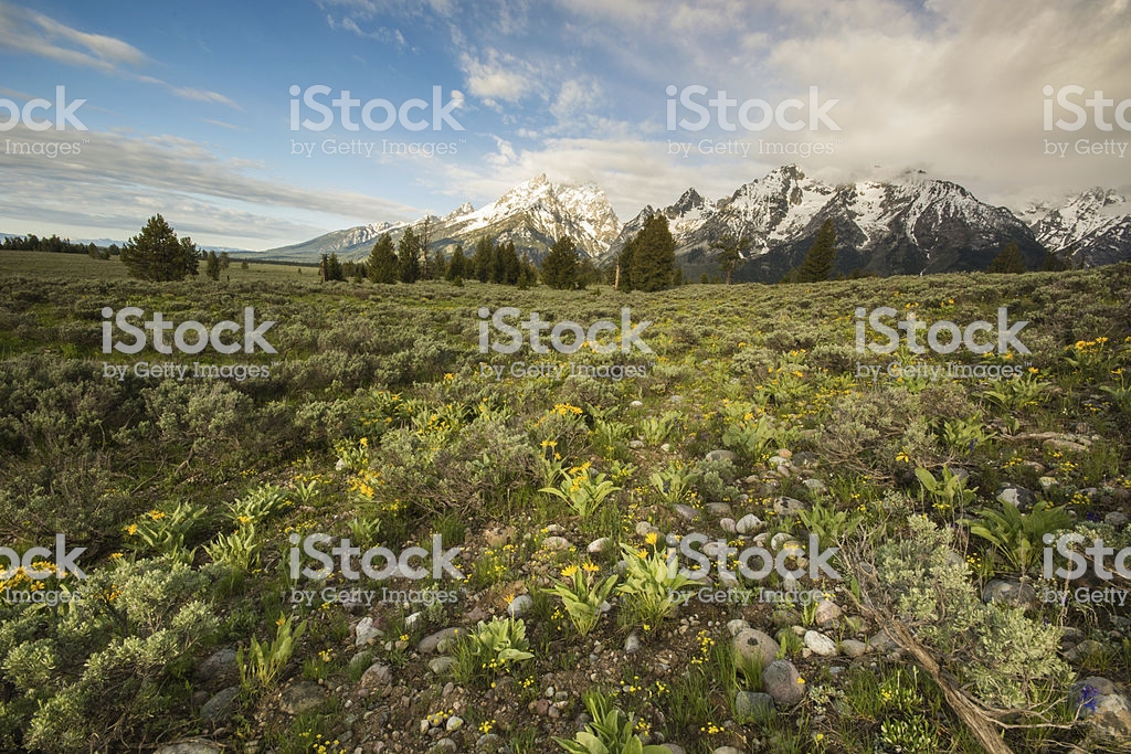 High Prarie With Grand Tetons In Background Stock Photo   Download 1024x683