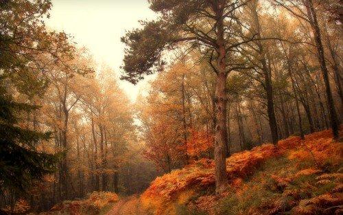fall autumn wallpaper hd 1080p