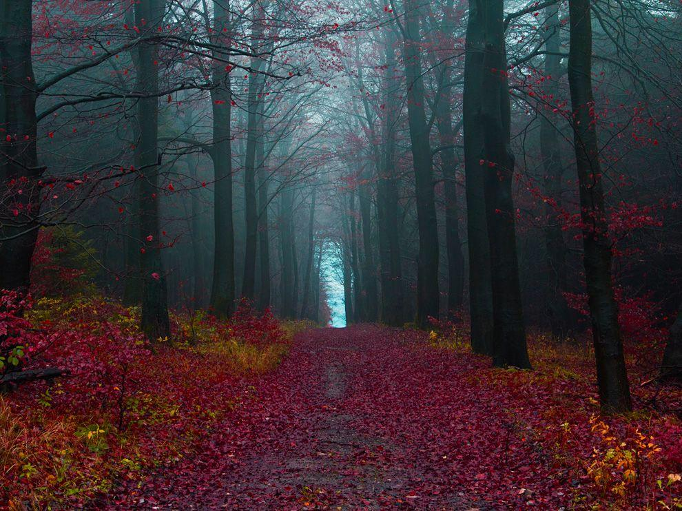 The Black Forest Germany photo on Sunsurfer 990x742