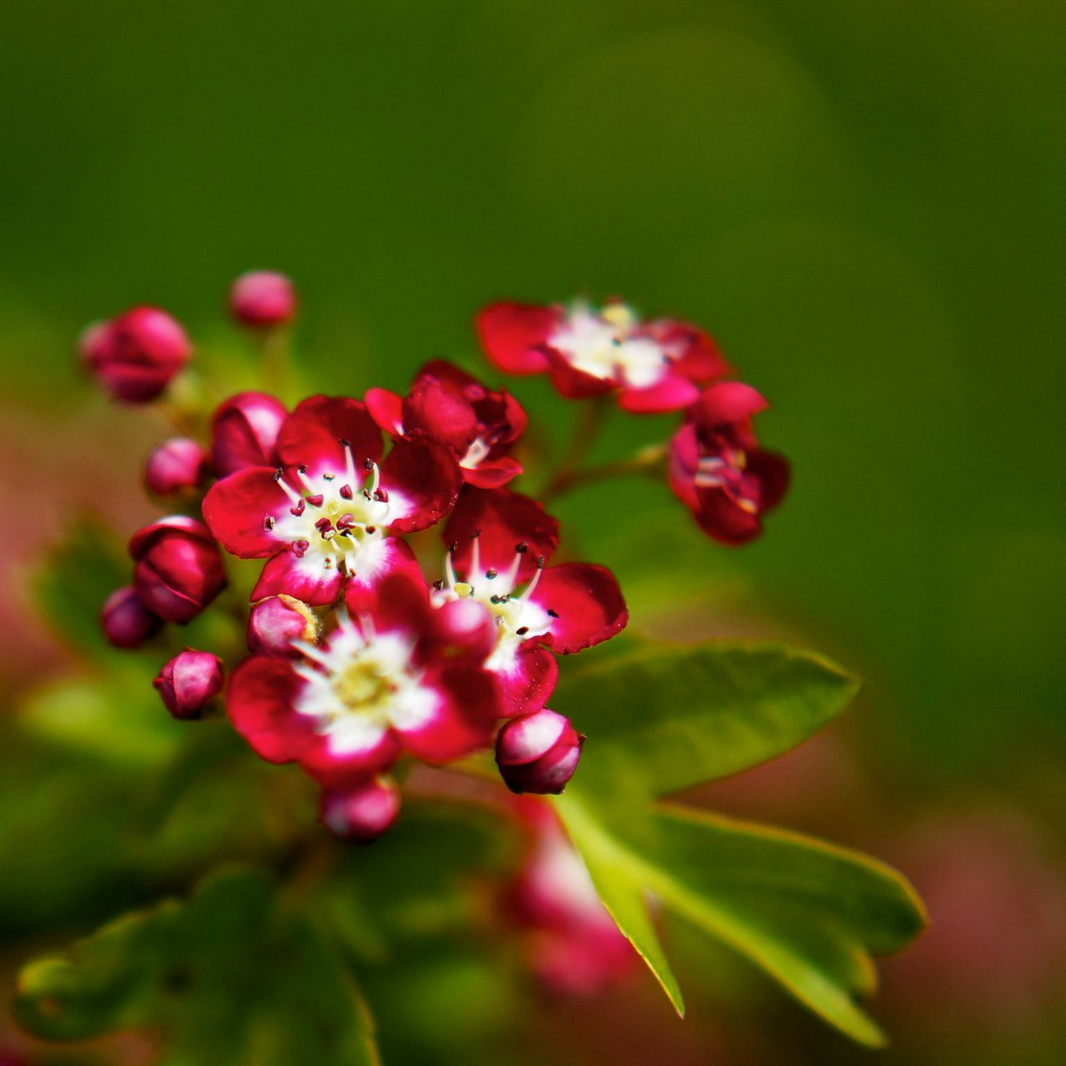 Small Flower Wallpaper