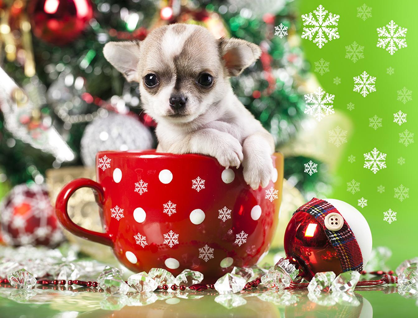 Wallpaper Puppy Chihuahua Dogs Christmas Mug Animals 1343x1024