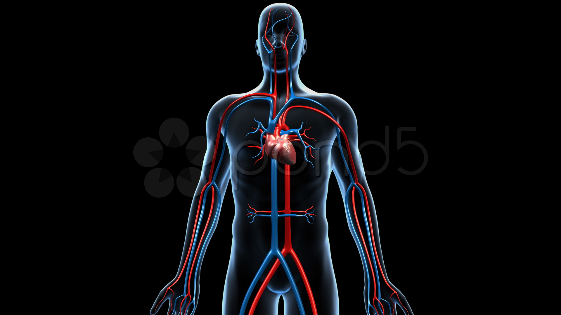 Best 55 Cardiovascular System Wallpaper on HipWallpaper 1920x1080
