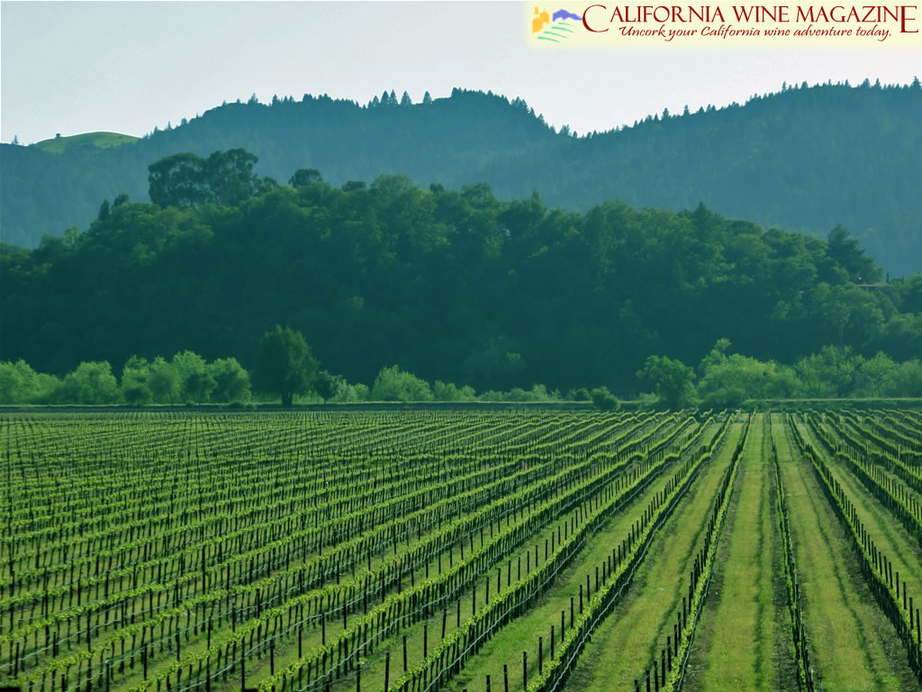 California Wine Magazine   Wallpaper 1024x768