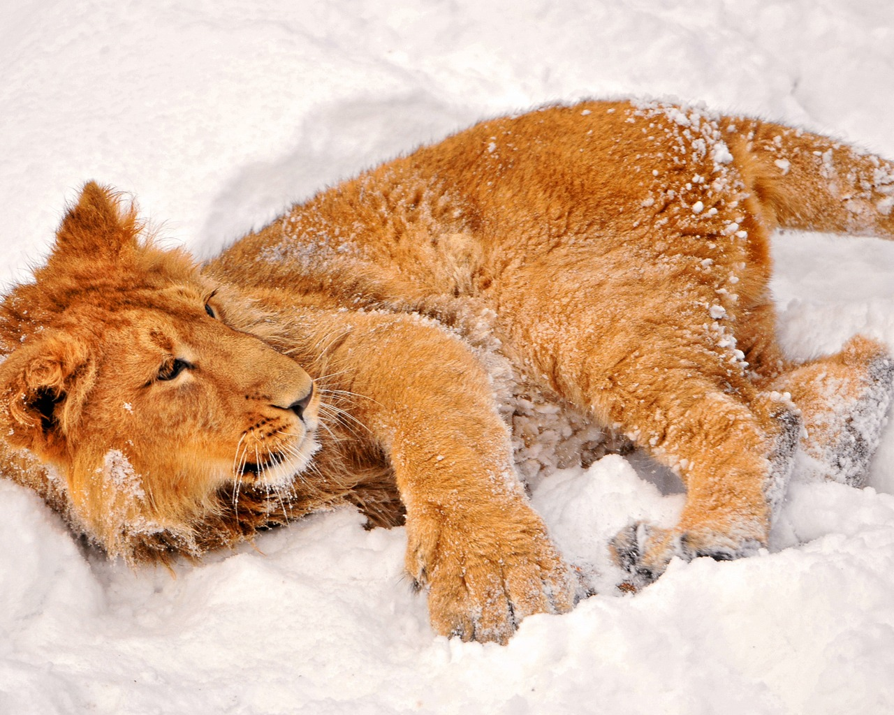 animals on winter wallpaper 4 animals on winter wallpaper 5 1280x1024