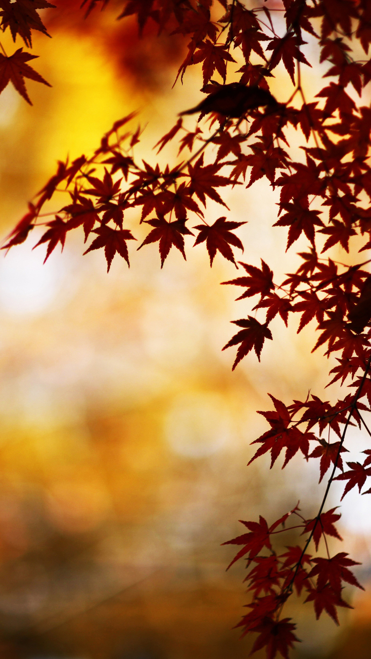 Fall Leaves iPhone Wallpaper HD 750x1334