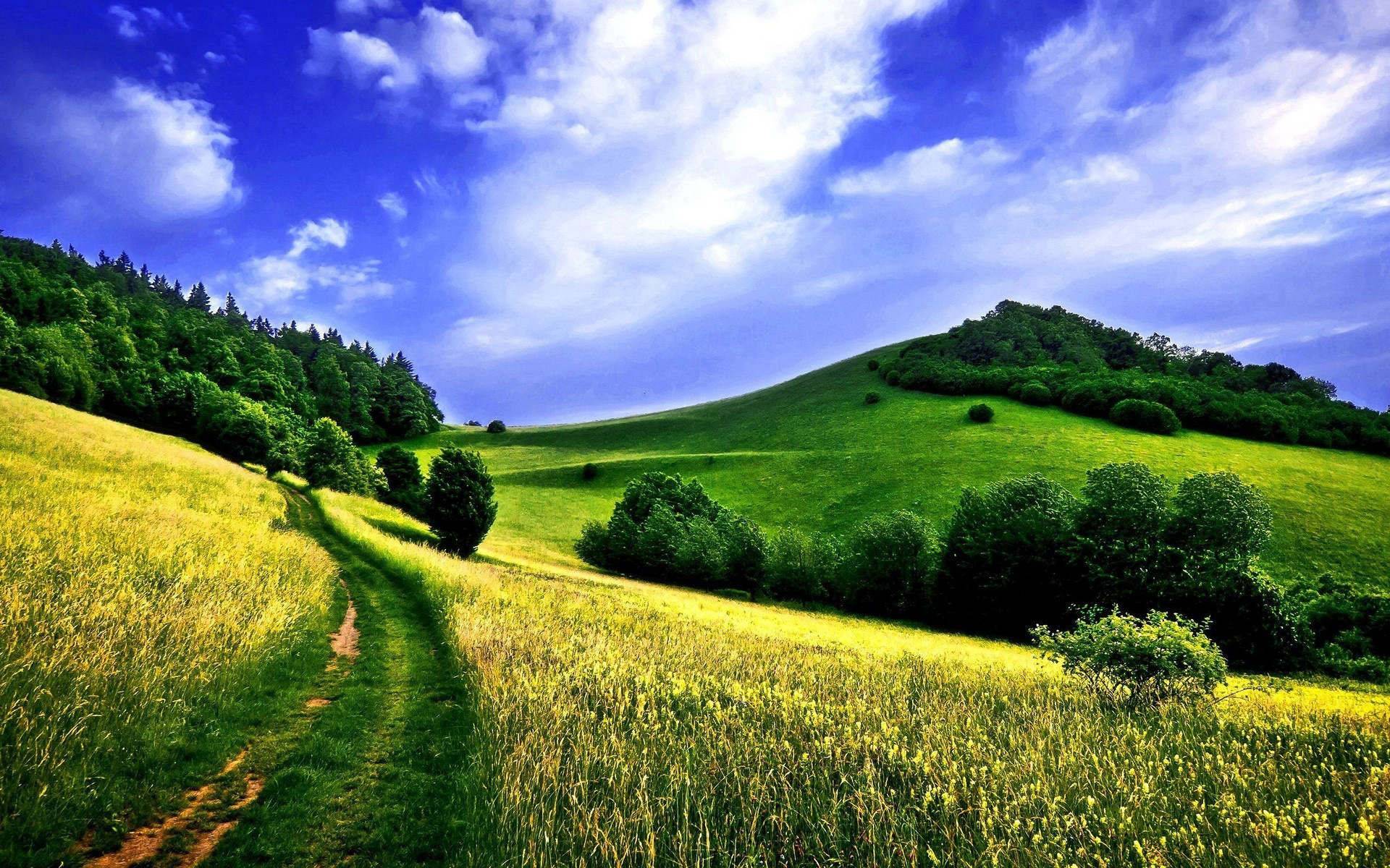 country road in a green field Download HD Wallpapers for 1920x1200