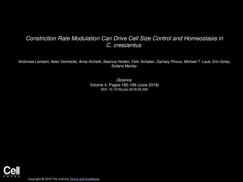 Constriction Rate Modulation Can Drive Cell Size Control and 1024x768