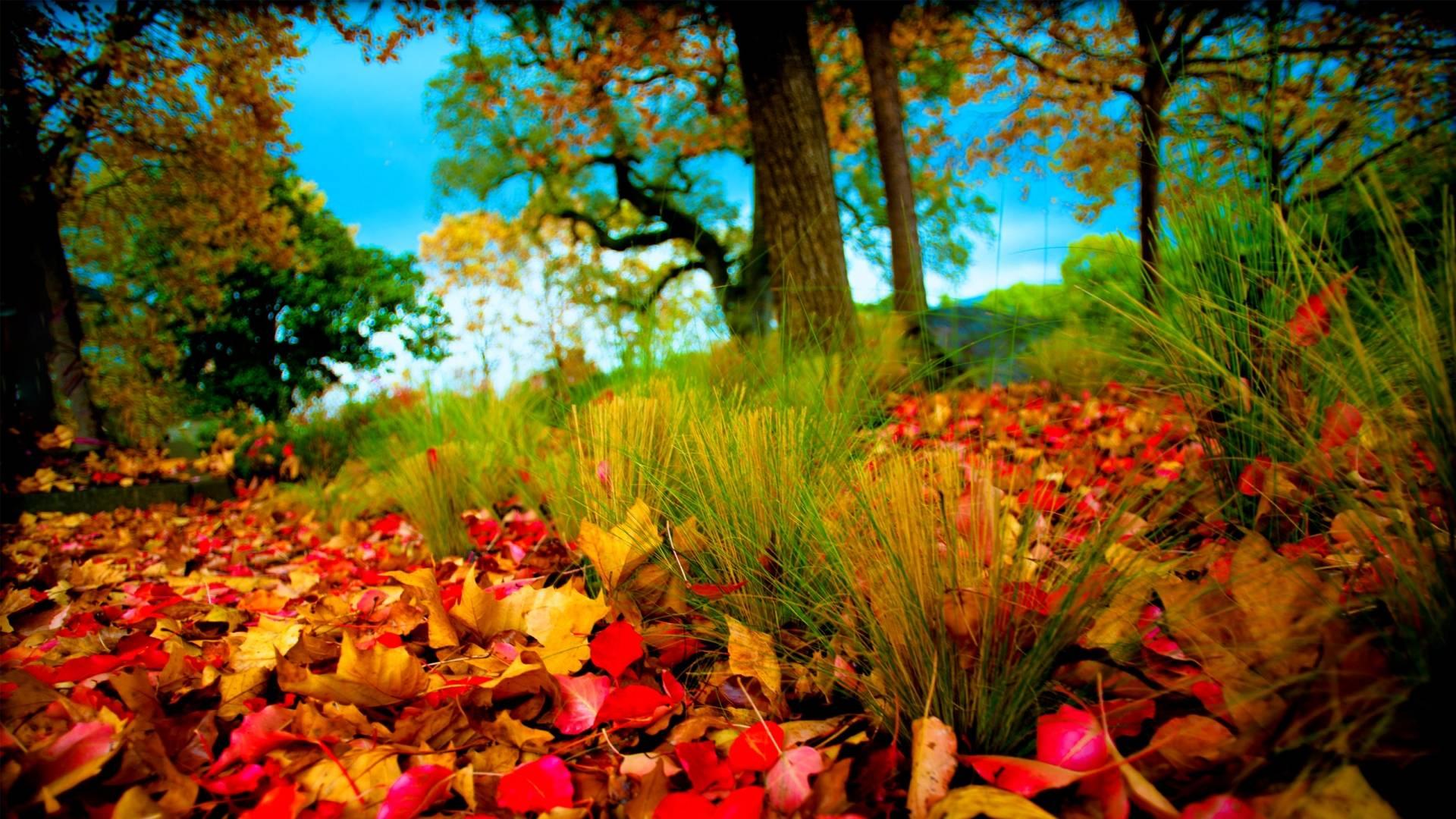 3D HD Nature Images Download 1920x1080