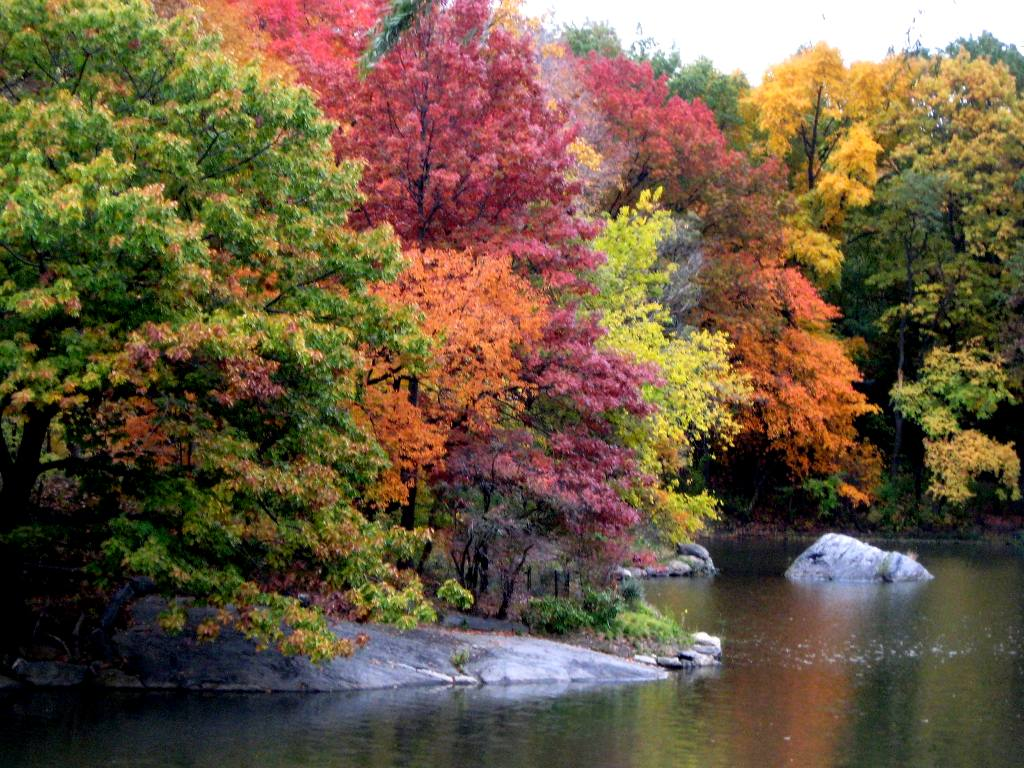 Autumn Trees Along Lake In Central Park Background Image 1024x768