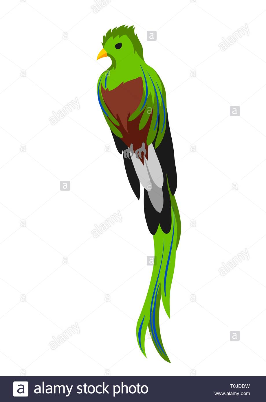 Illustration of quetzal Tropical exotic bird on white background 919x1390
