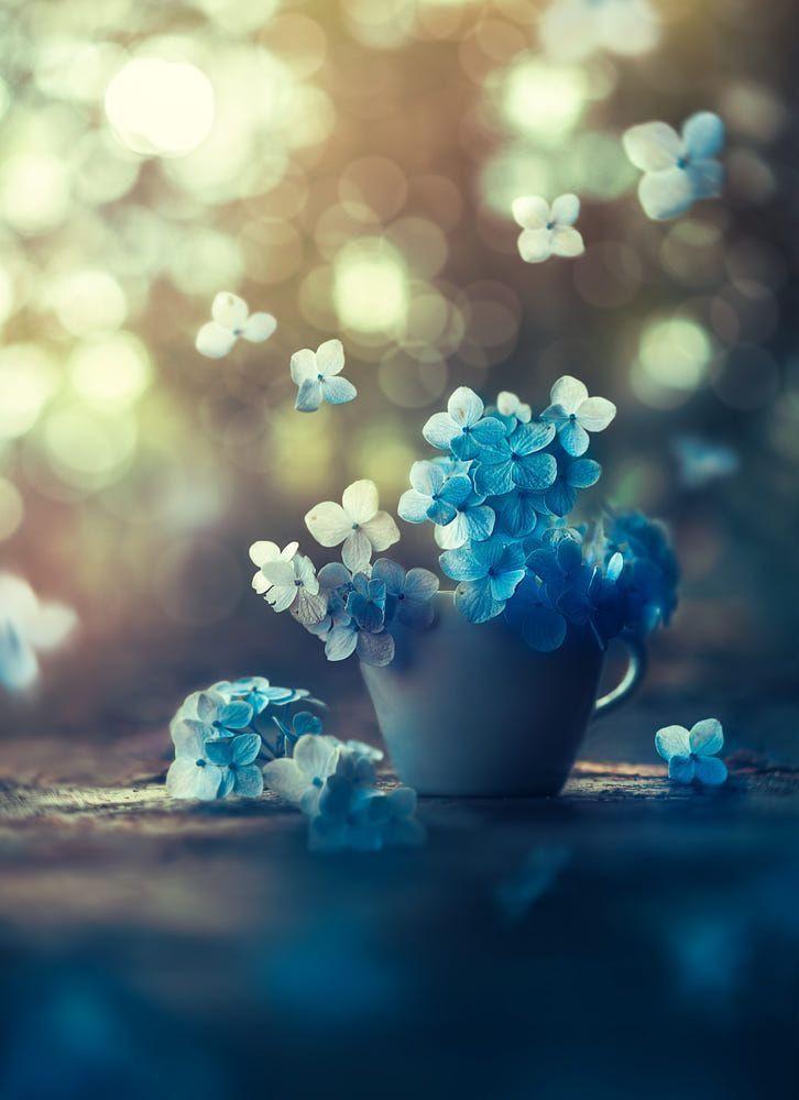 Blue Flowers Wallpaper World Flower Trending Entertaining 2 31919 726x1000