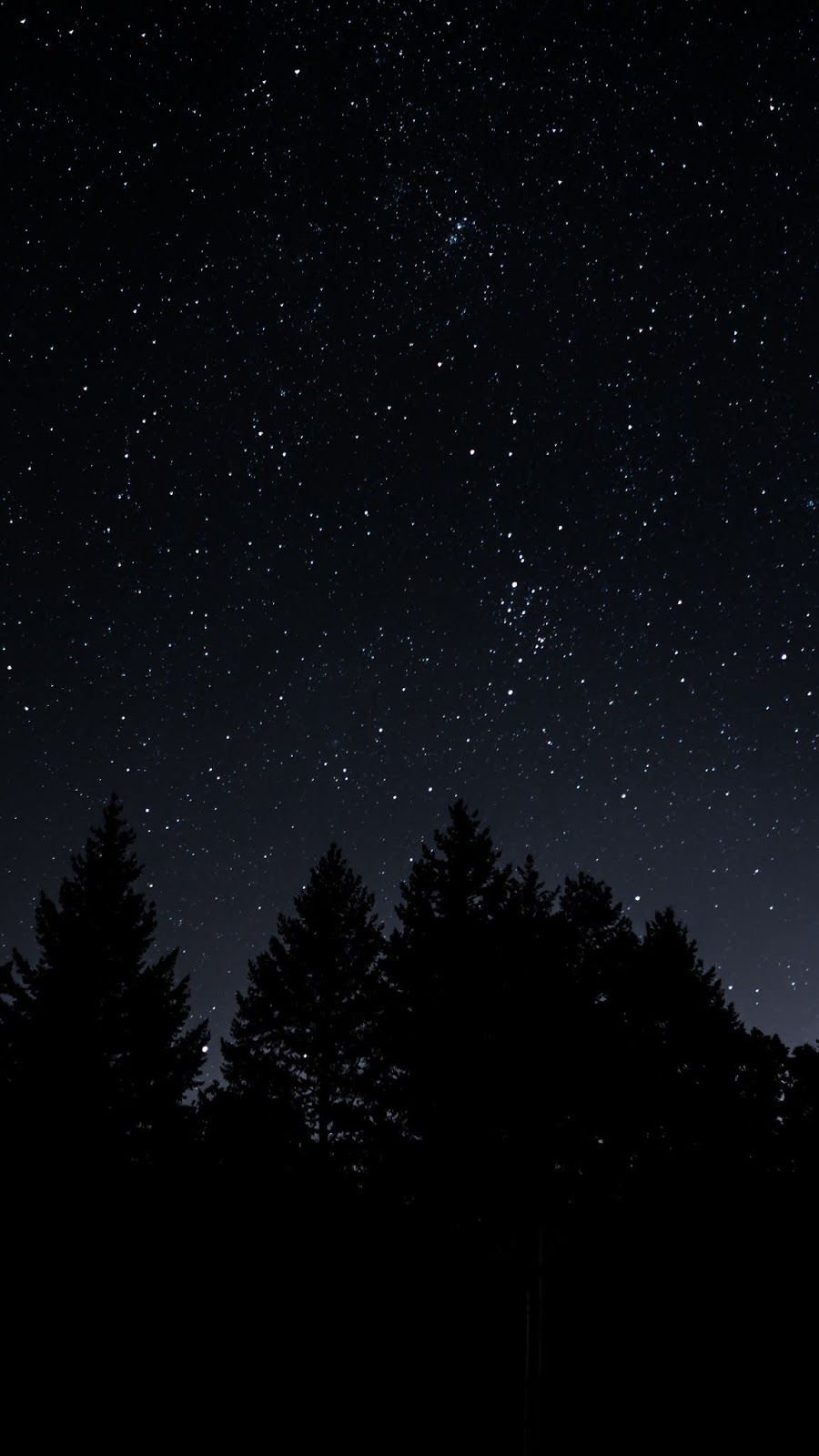 Sky   Starry sky trees night id 46402   HD Wallpapers Night