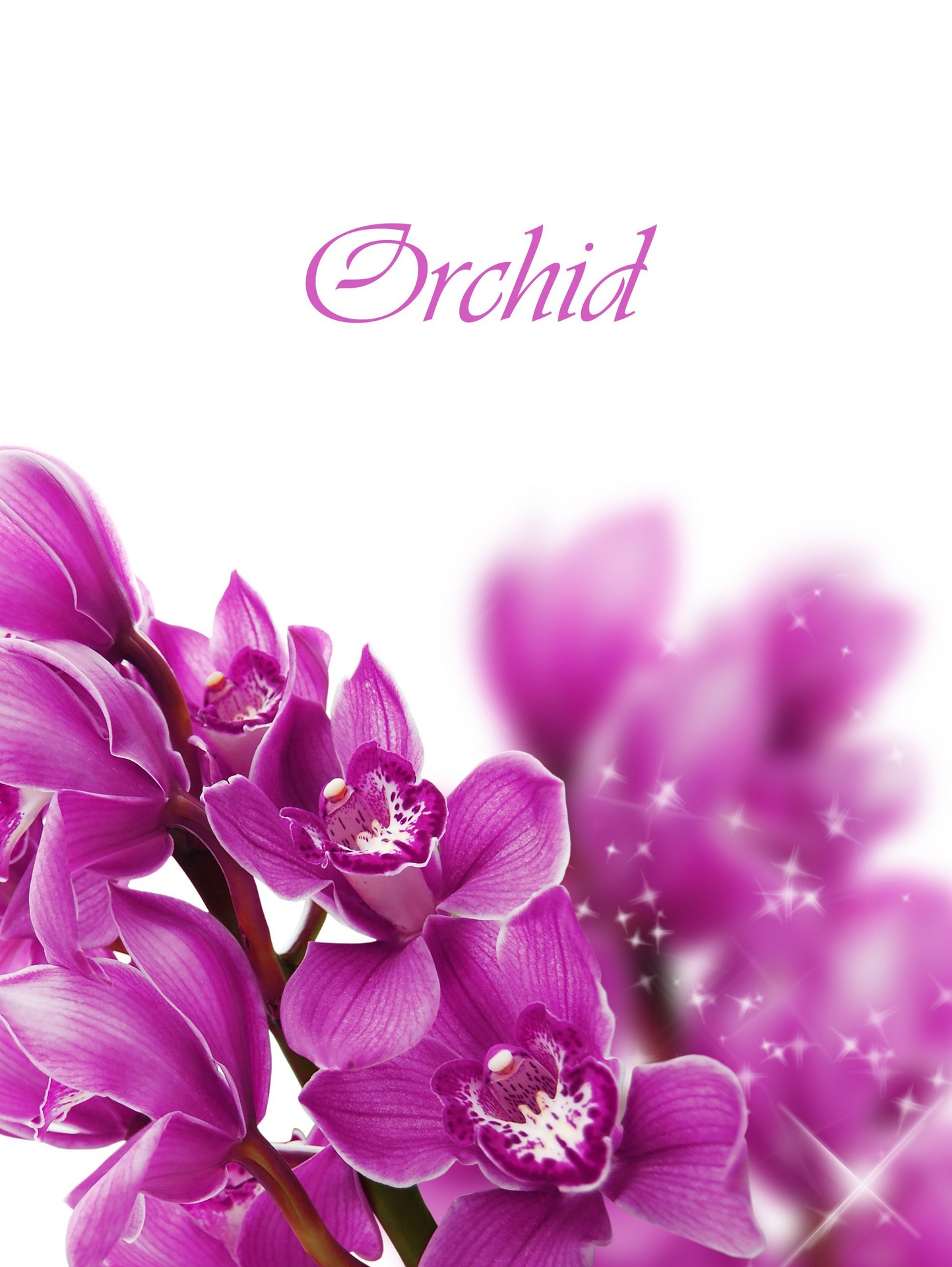 Background Bouquet Flower Isolated Orchid Purple