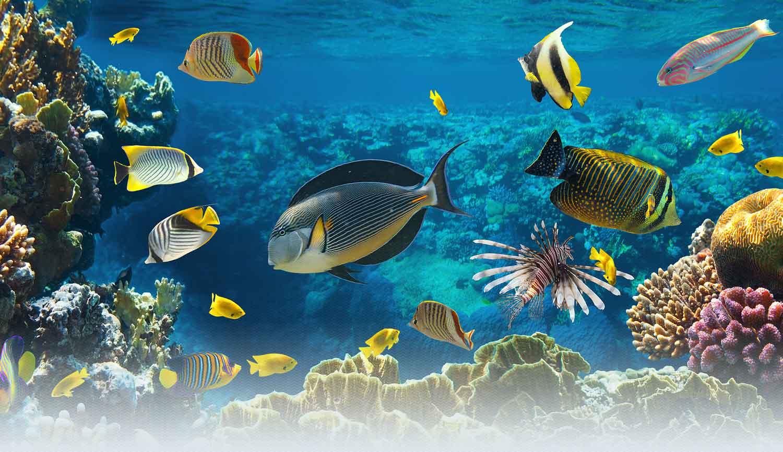 Aquaculture school projects 1500x866