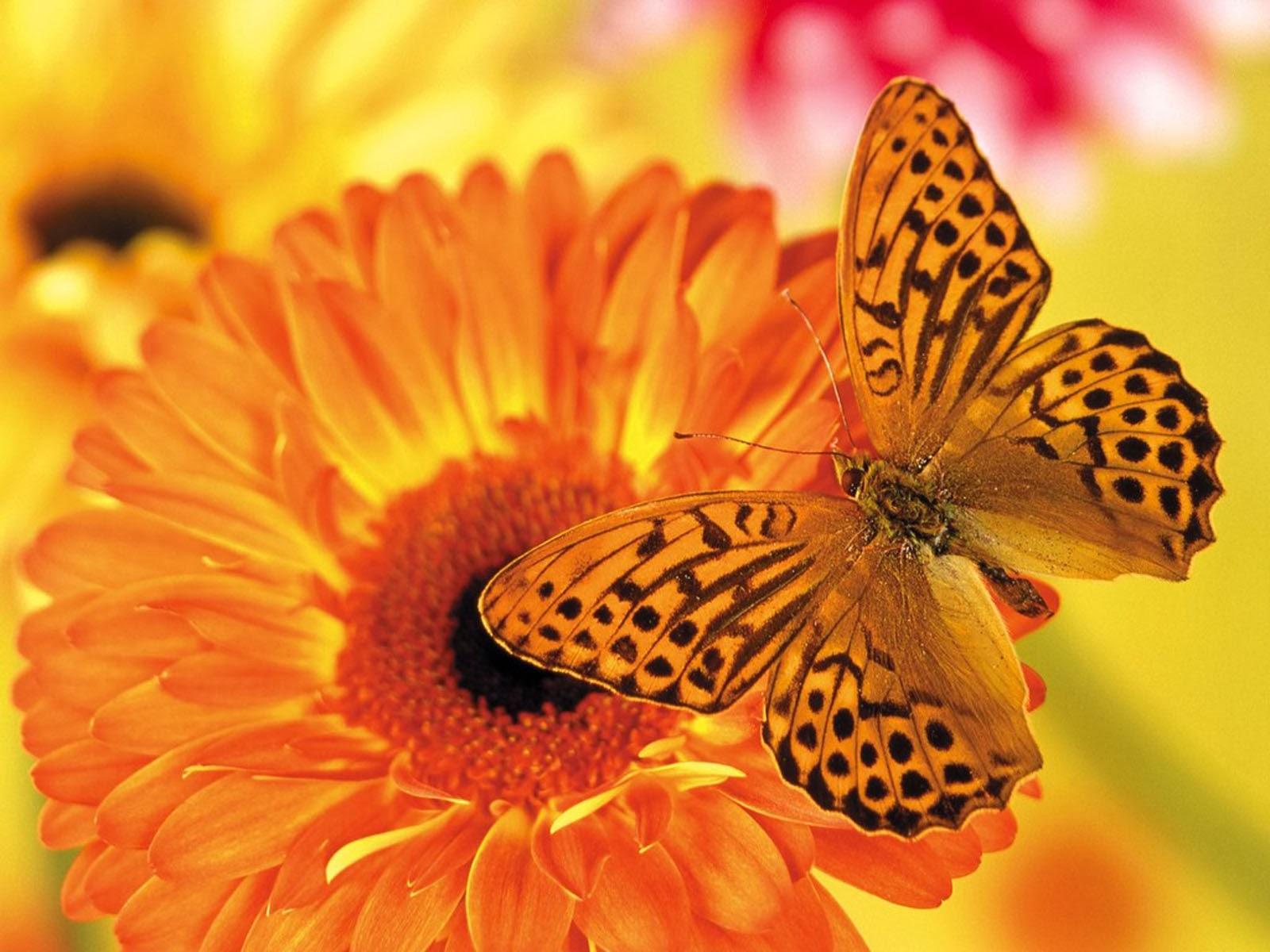 Днем, открытка рождение бабочки