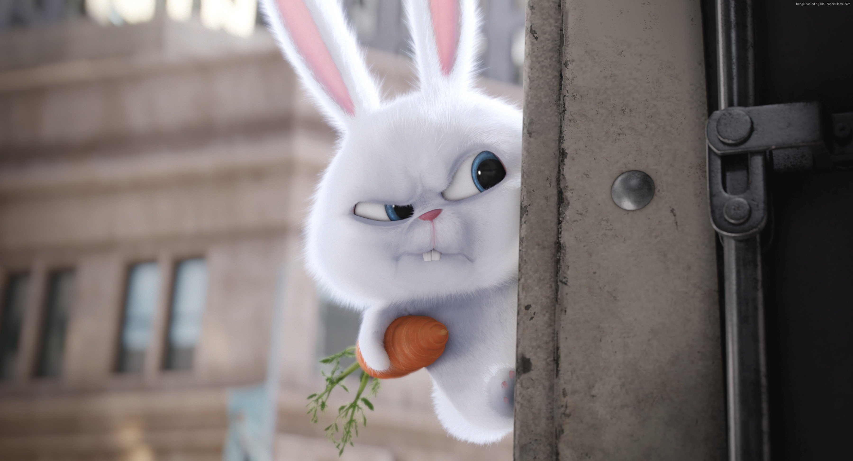 Free Download The Secret Life Of Pets Wallpaper Movies Animation