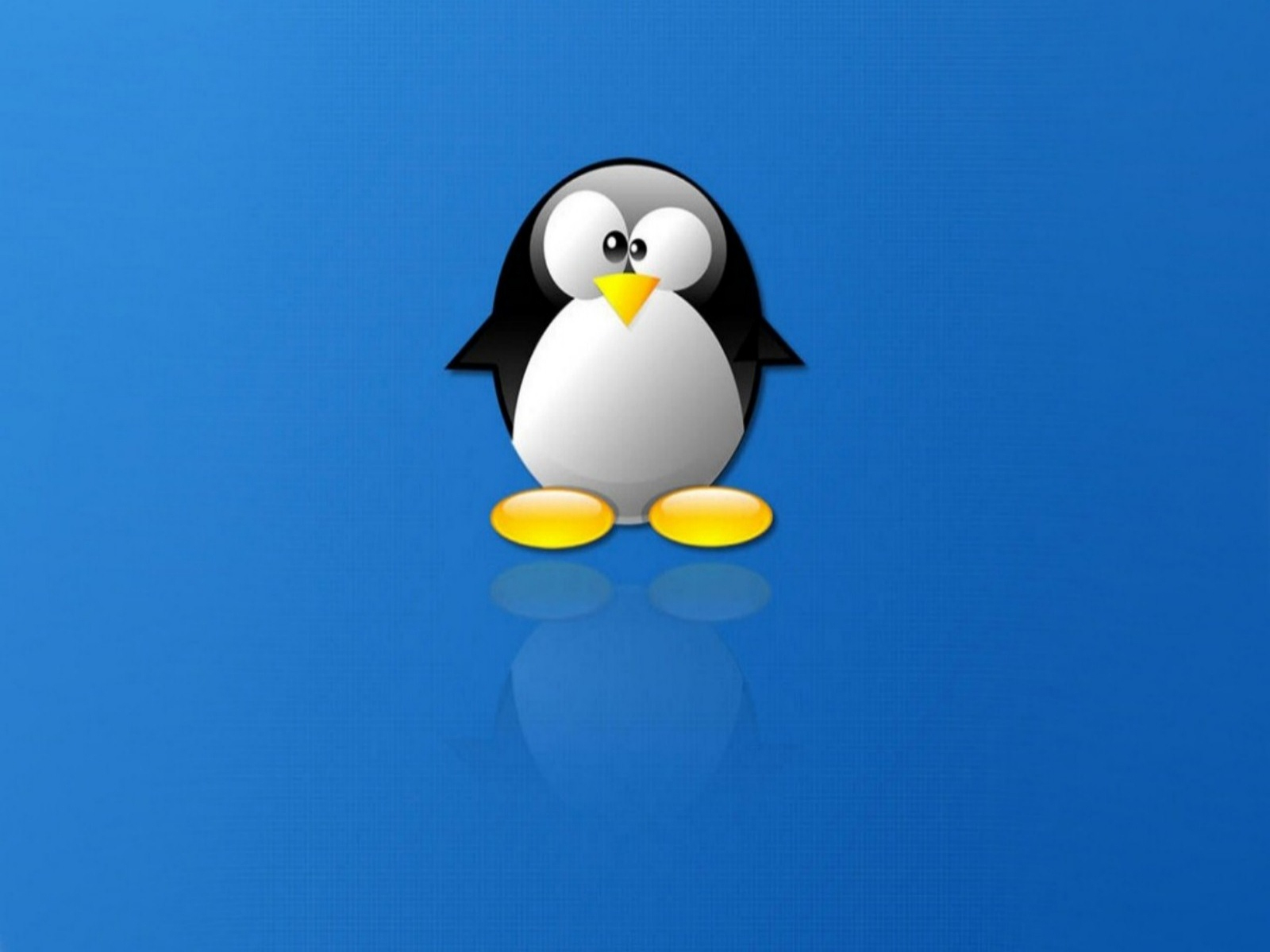 penguin wallpaper for your computer - wallpapersafari