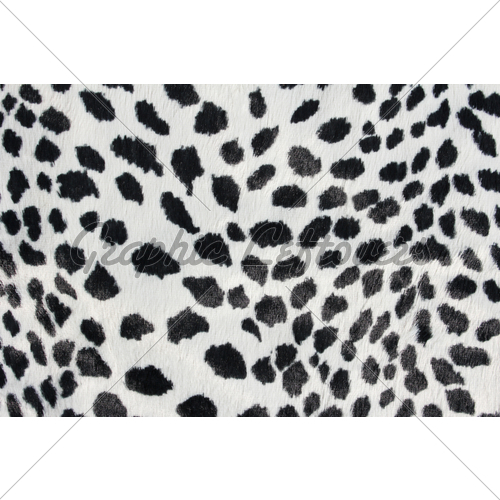 Close Up Of Black And White Dalmatian Spots 500x500