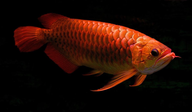 redfish wallpaper iphone