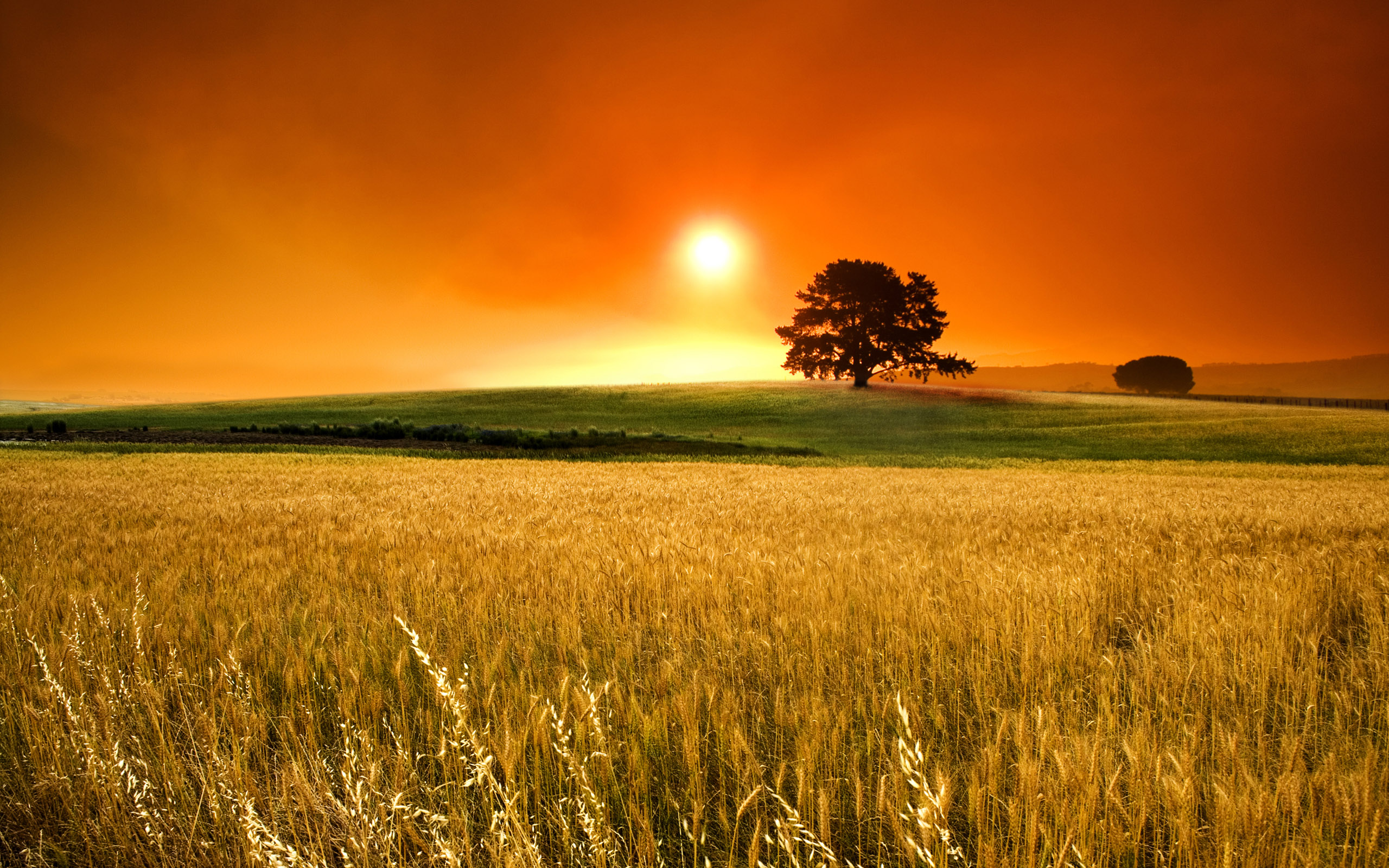 Sunny Day Wallpapers | HD Wallpapers