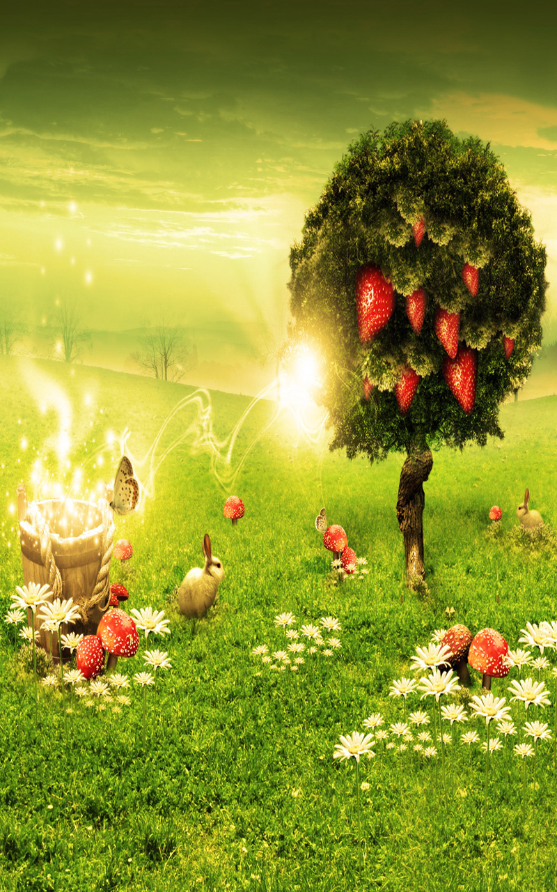 nature wallpaper for android cell phonejpg 800x1280