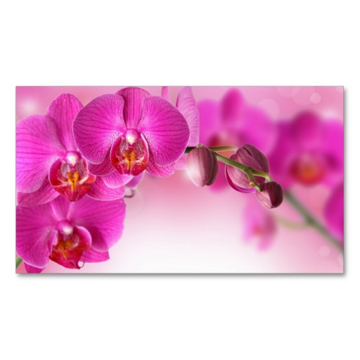 definition wallpapercomphotopurple flower wallpaper border9html 512x512
