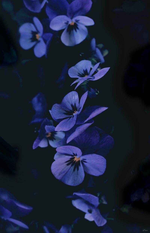 Pin by Kaylynn Smallwood on Wallpapers in 2019 Flower wallpaper 800x1240