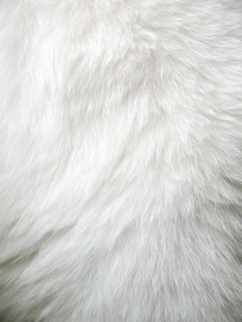 white fur on Tumblr 480x640